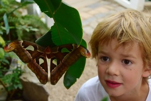 Kind mit Atlasspinner_Gerlinde Blaese